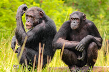 Jane Goodall Institute (JGI) South Africa Chimpanzee Sanctuary